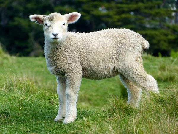 Lamb-Recipe-min-768x576